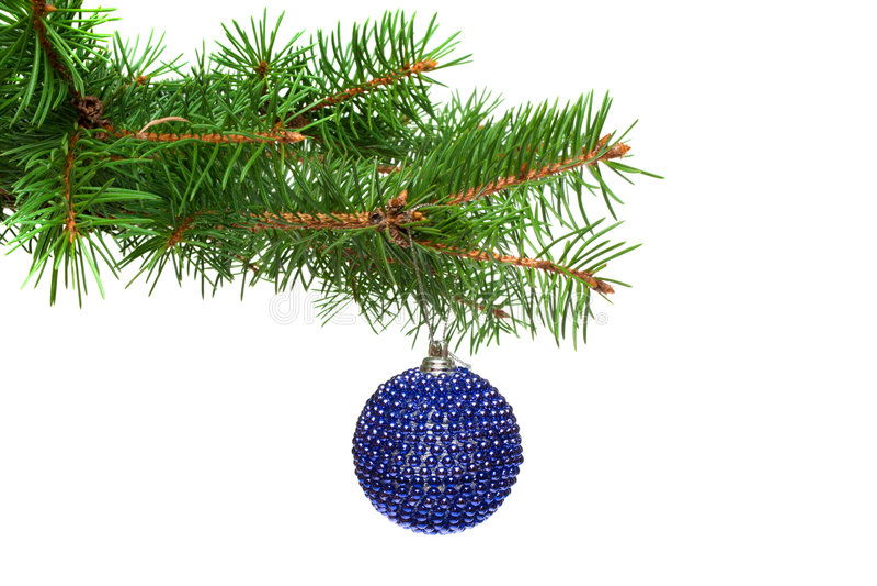 Esfera em uma filial de árvore do Natal, isolado da árvore do Xmas fotos de stock