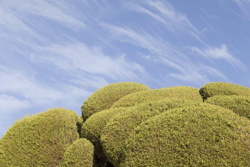 Esile si rannuvola i cipressi singolari nel parco di Retiro, Madrid immagini stock libere da diritti