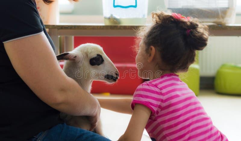 Eskisehir, Turchia - 5 maggio 2017: Bambina felice che accarezza un agnello all'evento animale di giorni nell'asilo immagine stock libera da diritti