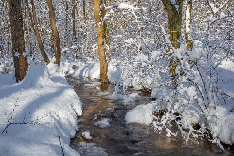 Eslovaquia - The Creek en bosque del invierno imágenes de archivo libres de regalías