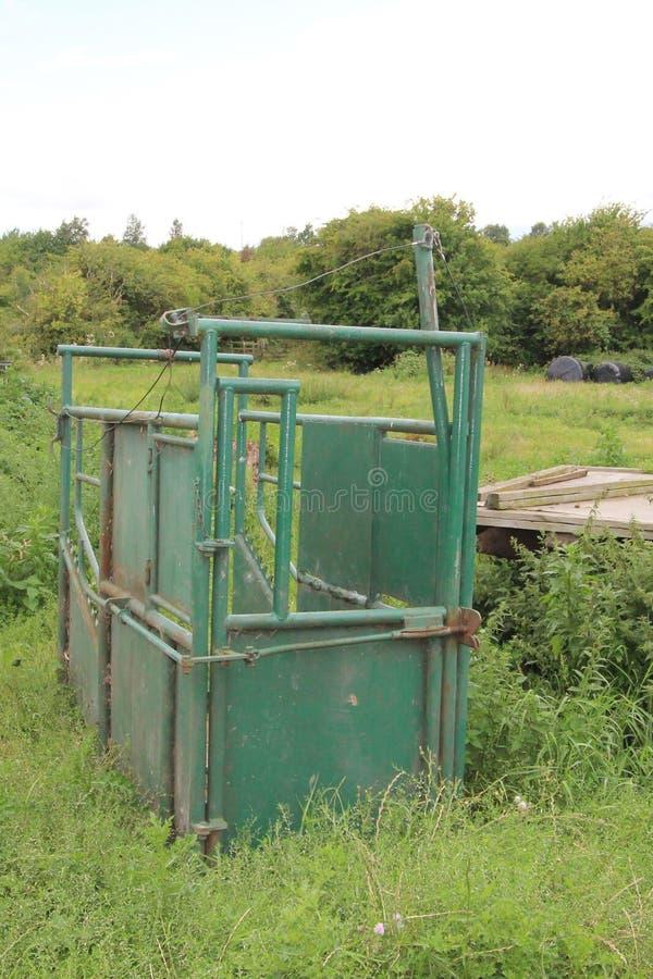 Esmagamento do gado do equipamento de cultivo usado para o cuidado veterinário de grandes animais tais como o gado imagens de stock