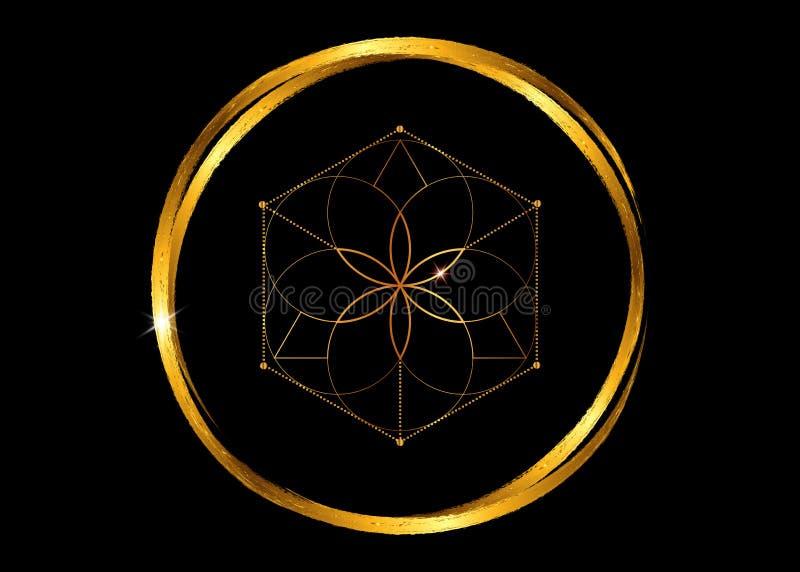Esoteriskt guld- symbol av alkemi, blomma av liv Sakral geometri, grafisk svart best?ndsdelvektor som isoleras eller Guld- runda, royaltyfri illustrationer