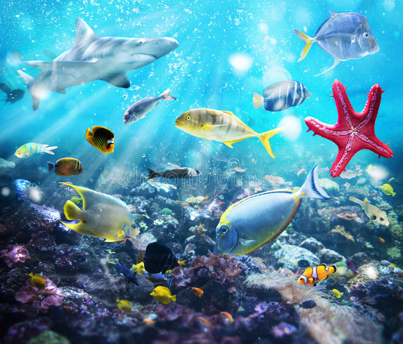 Espèce marine photos stock