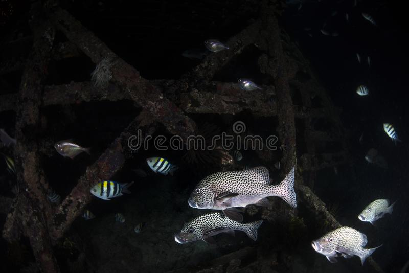 Espèce marine et poissons sur le fond noir images libres de droits