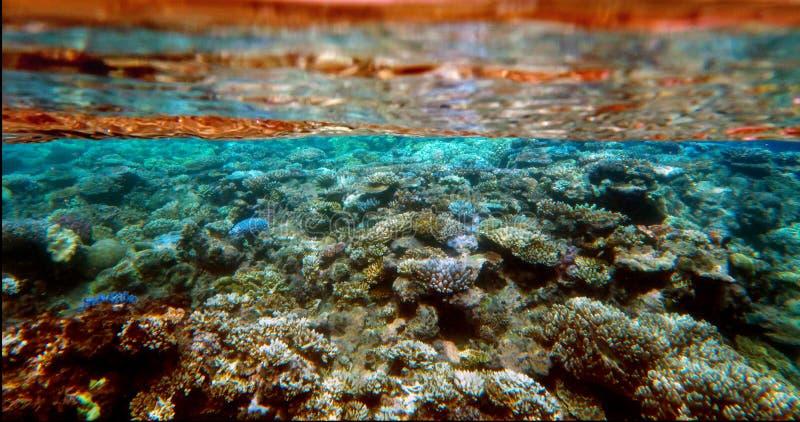 Espèce marine sous-marine chez la Grande barrière de corail photos stock