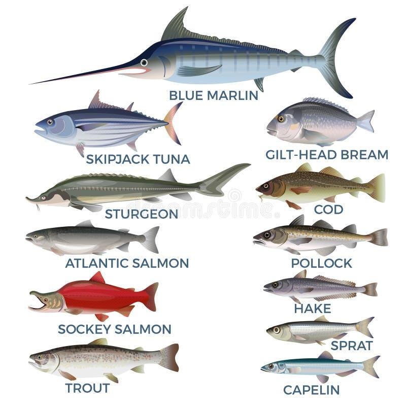 Espèces commerciales de poissons illustration stock
