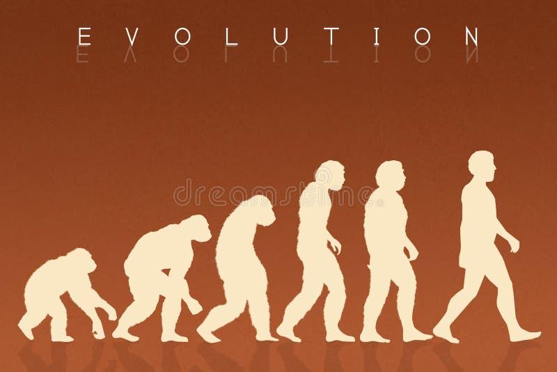 Espèces d'évolution humaine illustration libre de droits