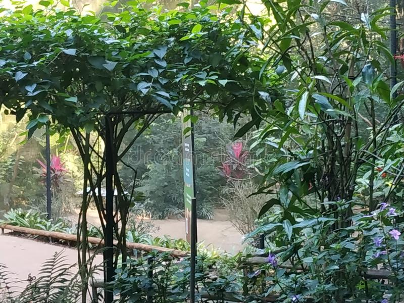 Espèces d'arbre chez Parque DAS Aves photo stock