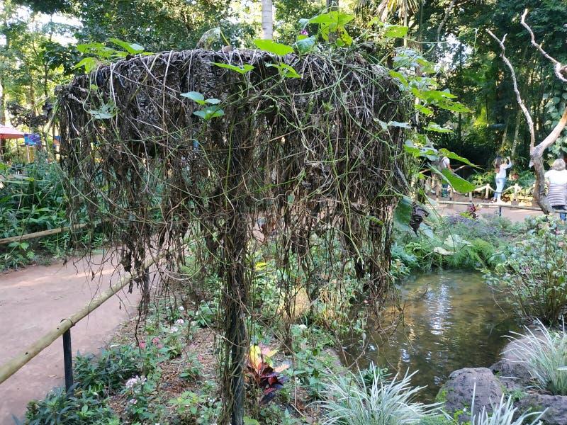 Espèces d'arbre chez Parque DAS Aves images stock