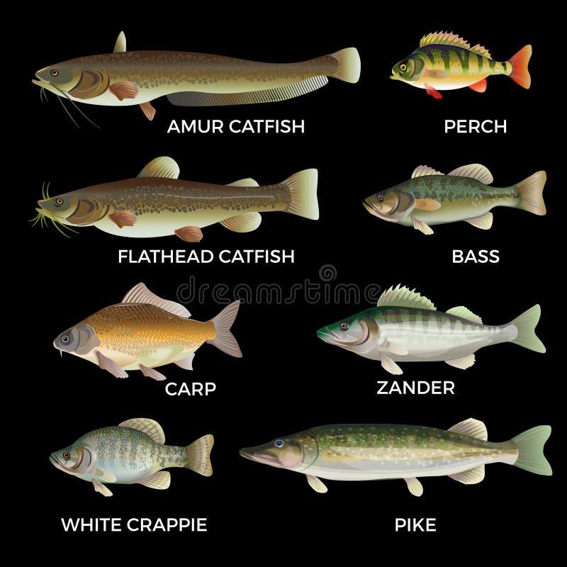 Espèces de poisson d'eau douce illustration stock
