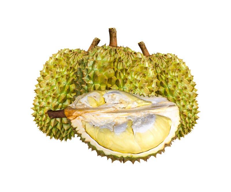Espèces Monthong Thaïlande de durian d'isolement sur le fond blanc photographie stock libre de droits