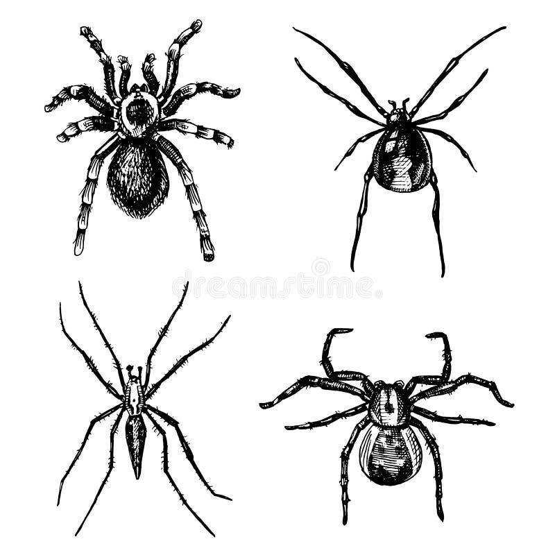 Espécie da aranha ou do aracnídeo, a maioria de insetos perigosos no mundo, vintage velho para o Dia das Bruxas ou projeto da fob ilustração royalty free