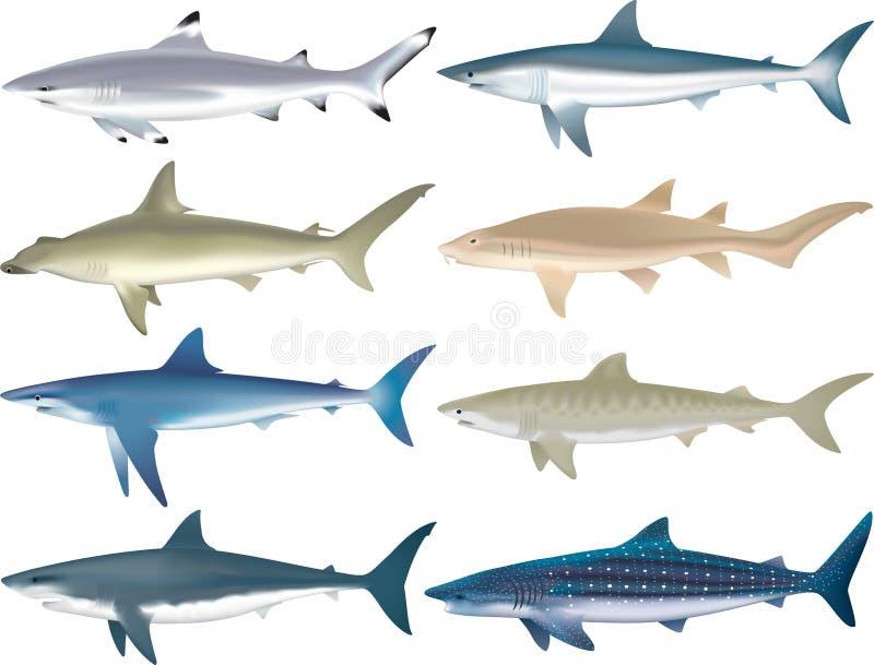Espécie dos tubarões