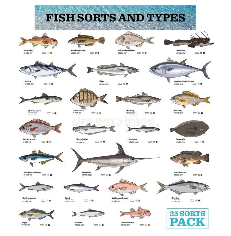 25 espécies de peixes com seus nomes ilustração do vetor