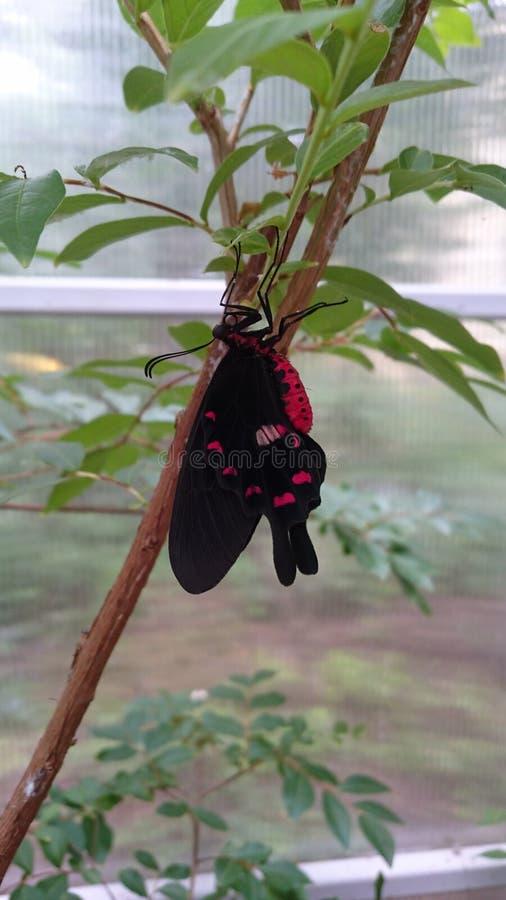 Espécies exóticas de borboletas vivas - insetos coloridos em seu hábitat natural imagem de stock royalty free