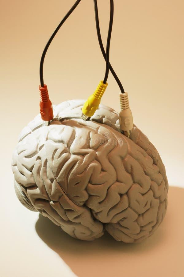 Espécime do cérebro com cabos do avoirdupois imagem de stock