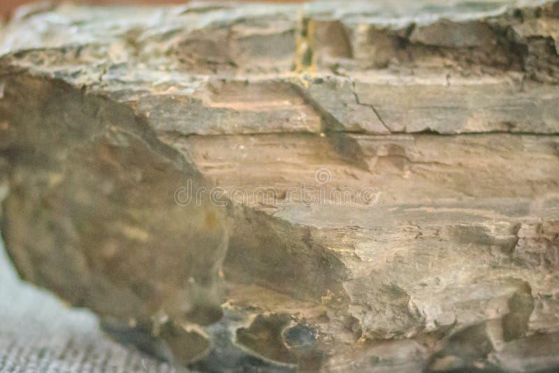 Espécime do lignite ou de carvão marrom O lignite é um combusti marrom macio fotos de stock royalty free