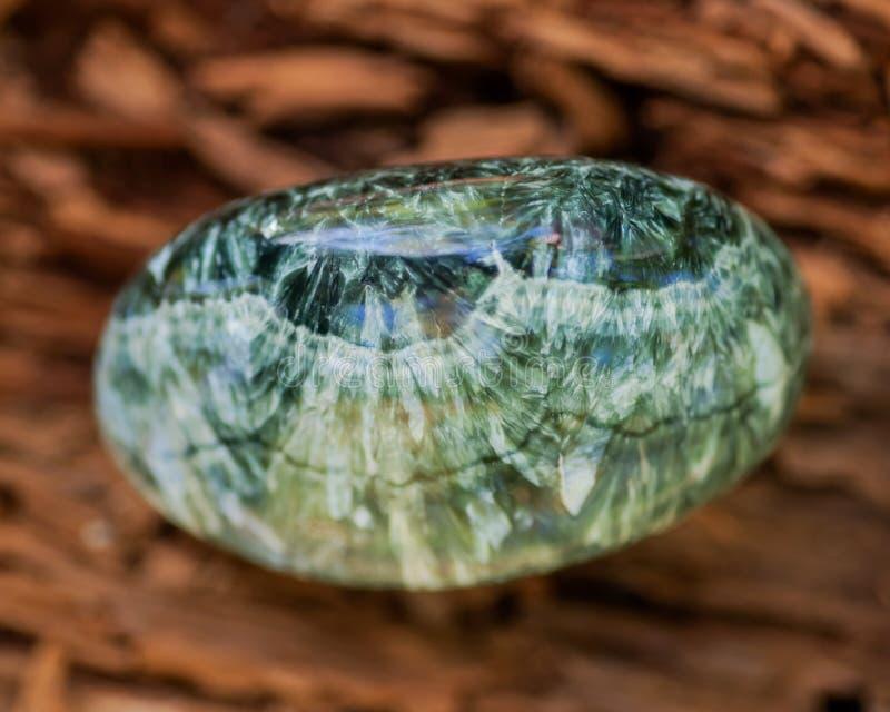 Espécime lustrado verde de Seraphinite de Sibéria oriental em Rússia na casca de árvore fibrosa Clinochlore da qualidade da gema  fotos de stock