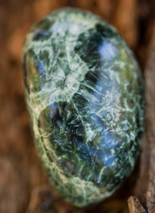 Espécime lustrado verde de Seraphinite de Sibéria oriental em Rússia na casca de árvore fibrosa Clinochlore da qualidade da gema  fotos de stock royalty free