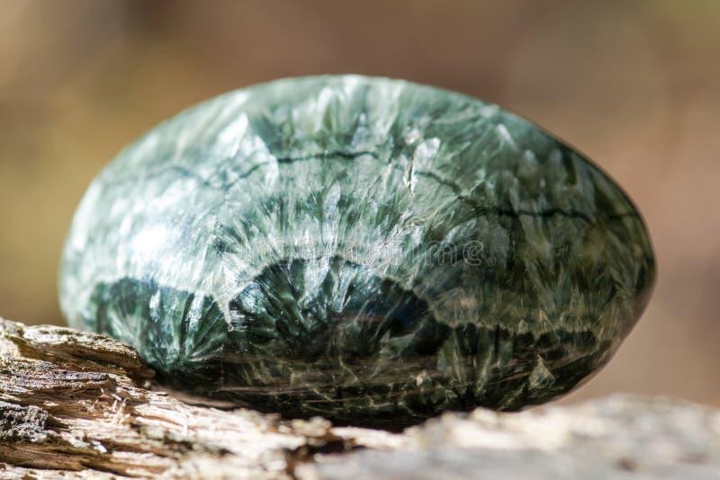 Espécime lustrado verde de Seraphinite de Sibéria oriental em Rússia na casca de árvore fibrosa no clinochlore da qualidade da ge foto de stock