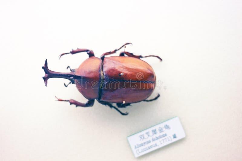 Espécimen del insecto fotografía de archivo