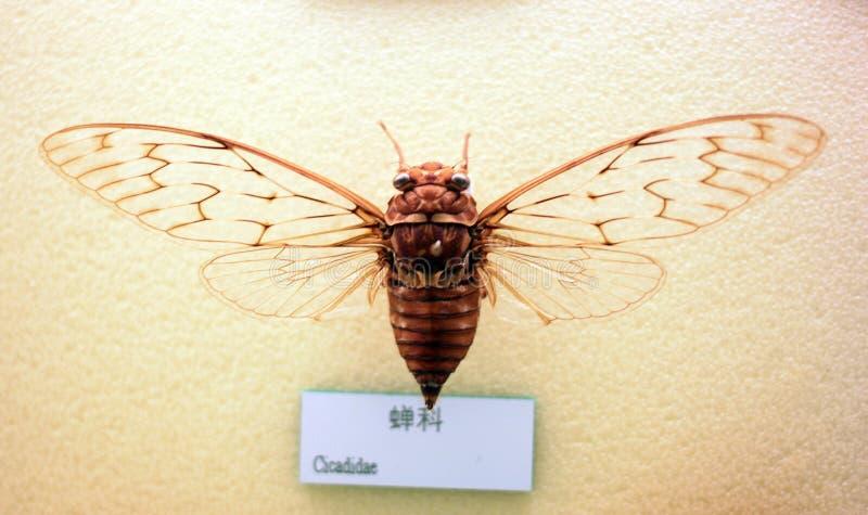 Espécimen del insecto imágenes de archivo libres de regalías