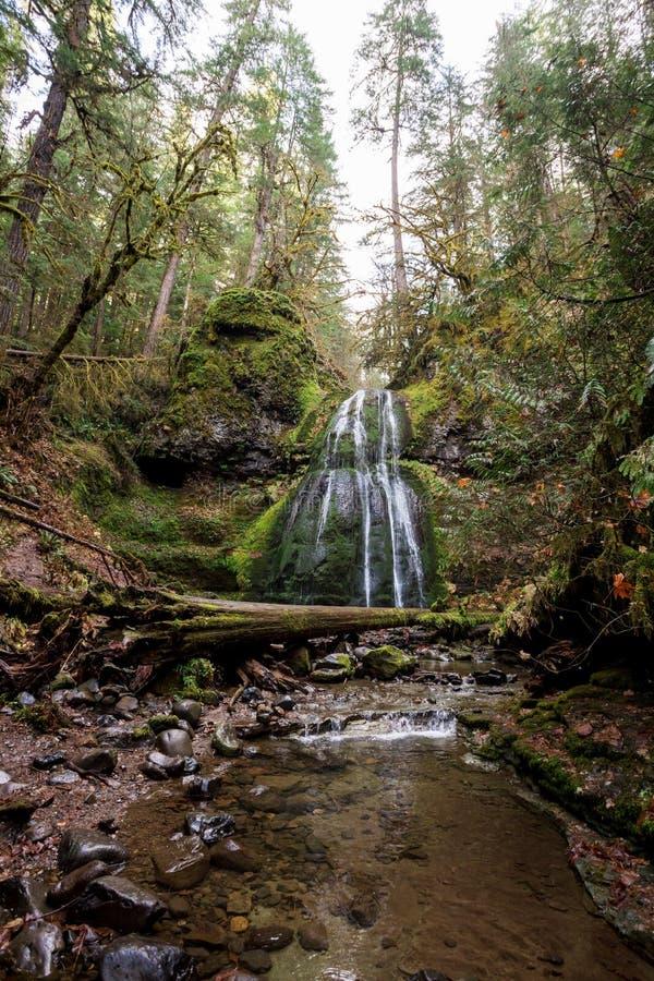 Espíritu cae bosque nacional Umpqua en Oregón fotos de archivo libres de regalías