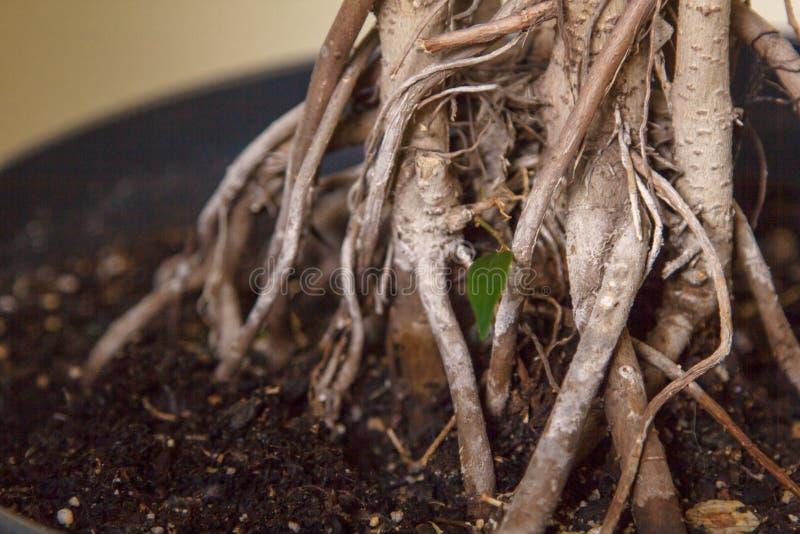 Espaço de jardinagem Plantas em pasta fora fotografia de stock