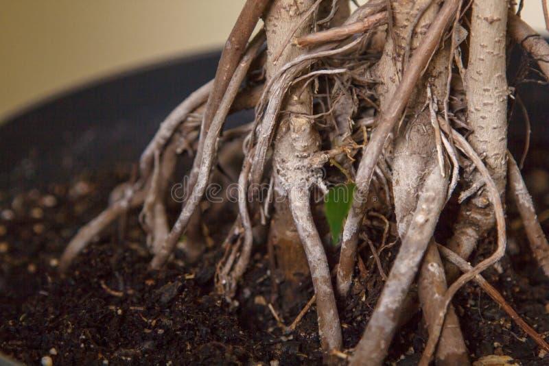 Espaço de jardinagem Plantas em pasta fora imagem de stock
