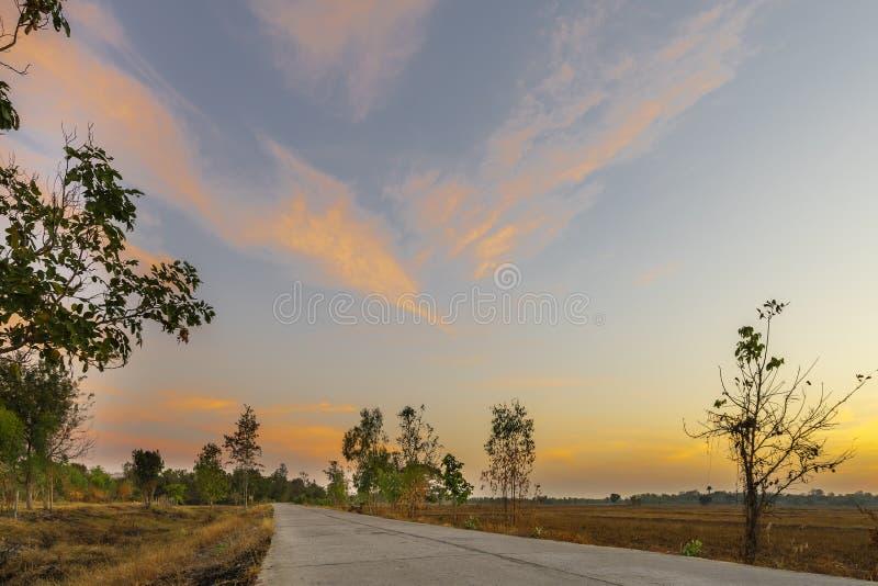 Espaço livre bonito dourado do nascer do sol com campos de grama seca e estrada longa concreta ou do cimento no campo na manhã no imagem de stock