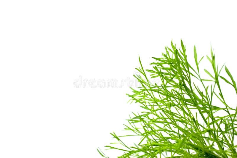 Espaço verde da folha e da cópia imagens de stock royalty free