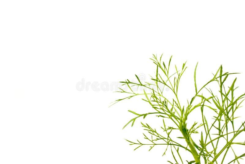 Espaço verde da folha e da cópia imagem de stock royalty free