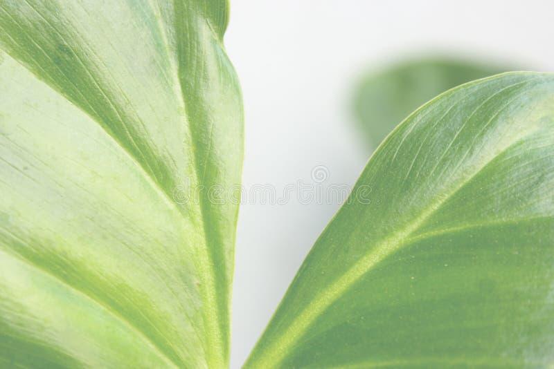 Espaço verde da folha e da cópia imagens de stock
