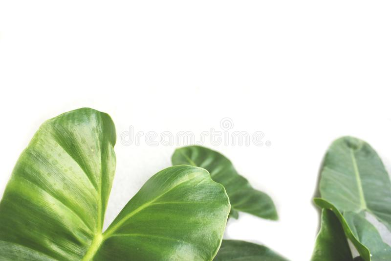Espaço verde da folha e da cópia foto de stock royalty free