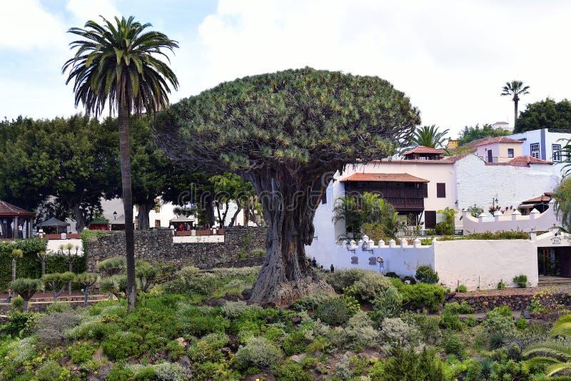 España, islas Canarias, Tenerife, Icod de los Vinos imagen de archivo