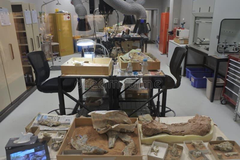Espacio de funcionamiento arqueológico del laboratorio para examinar los artefactos foto de archivo libre de regalías