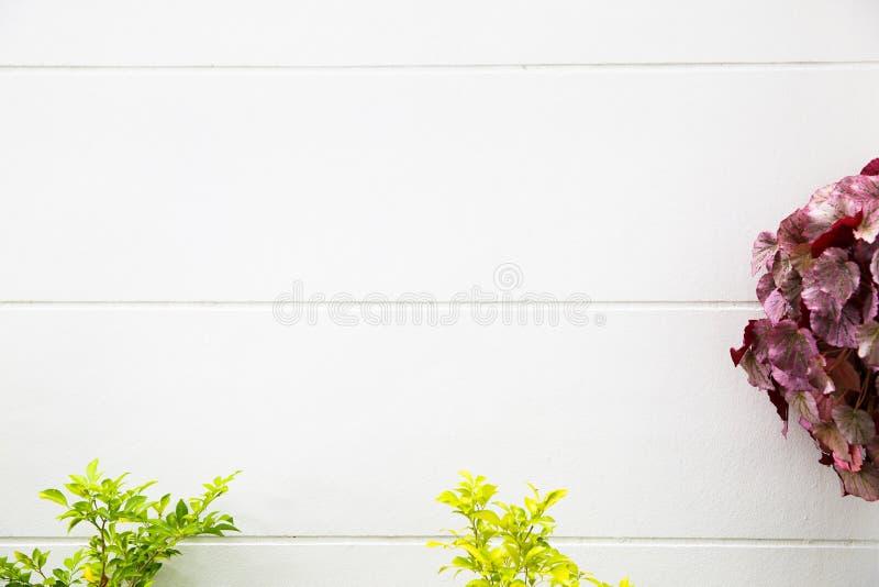 Espacio vacío, plantando las flores de la primavera foto de archivo libre de regalías