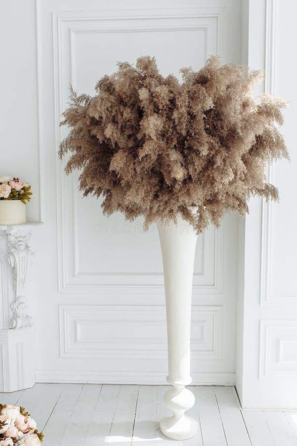 Espadaña común seca del cardo, de la bardana y de las cañas en el florero aislado en el fondo blanco de la pared fotos de archivo libres de regalías
