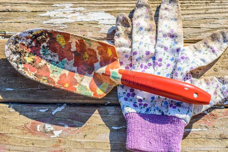 Espada del guante que cultiva un huerto y de jardín en la tabla de madera rústica foto de archivo