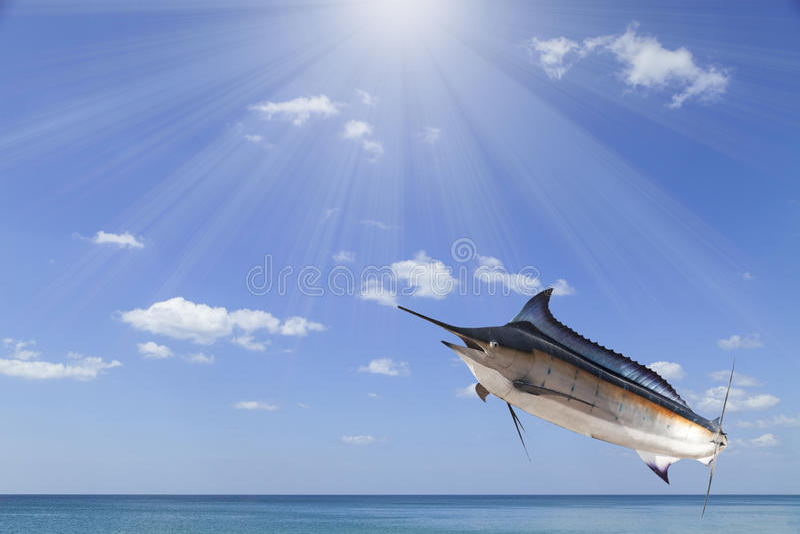 Espadim - espadarte, peixe de água salgada do Sailfish (Istiophorus) com sol fotografia de stock