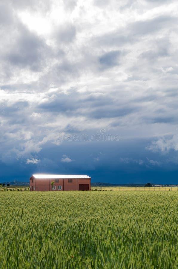 Espanha, campos de trigo imagens de stock royalty free