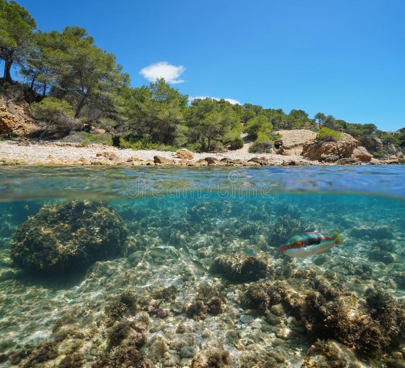 Espanha subaquática do mar Mediterrâneo dos peixes rochosos da angra imagem de stock