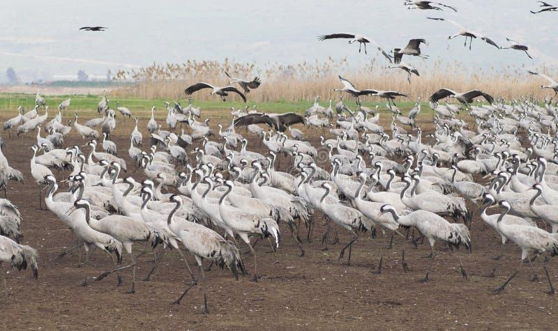 Espansione degli uccelli fotografie stock