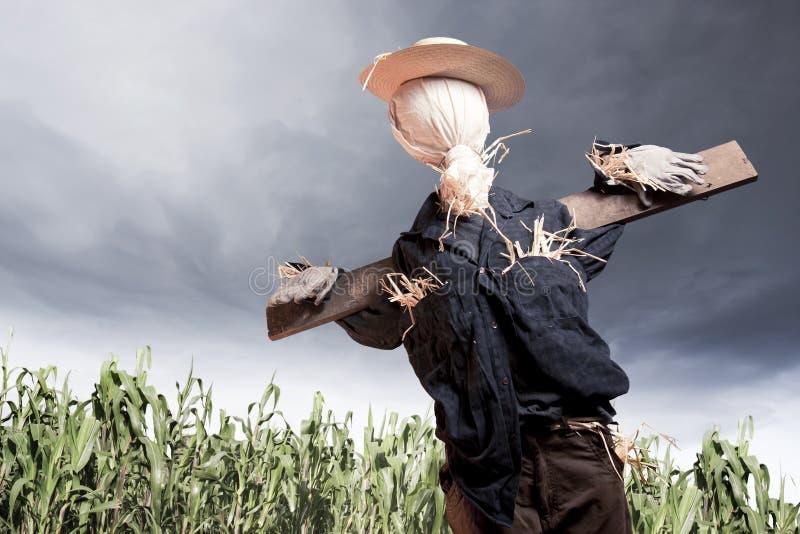 Espantalho no campo de milho em um dia nebuloso imagens de stock