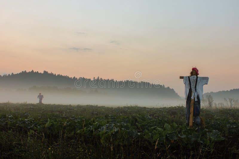 Espantapájaros en la niebla imagenes de archivo
