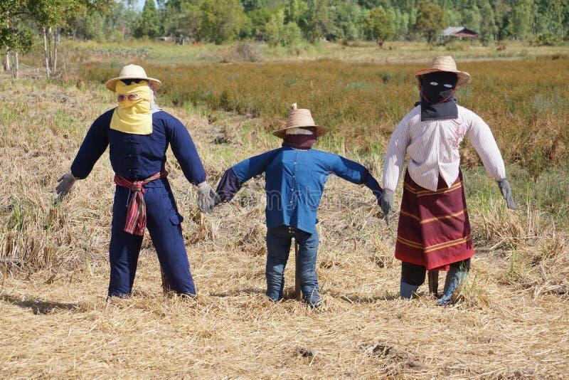 Espantapájaros en Tailandia fotos de archivo