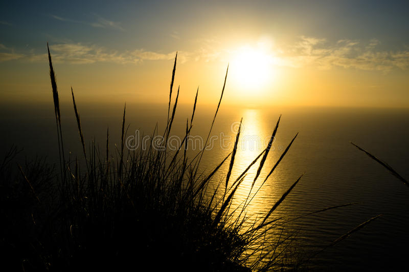 Esparto reeds. Against the background of a beautiful Mediterranean sunrise stock photography