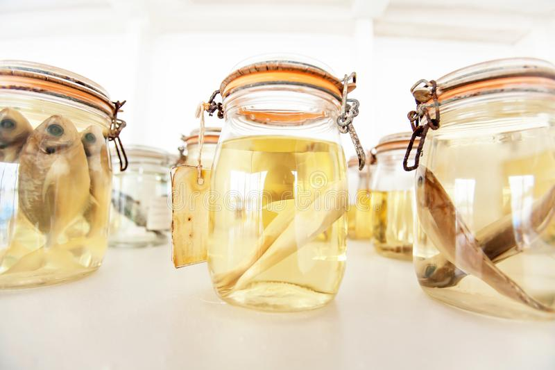 Especímenes de los pescados de mar preservados en los tarros de cristal fotografía de archivo libre de regalías