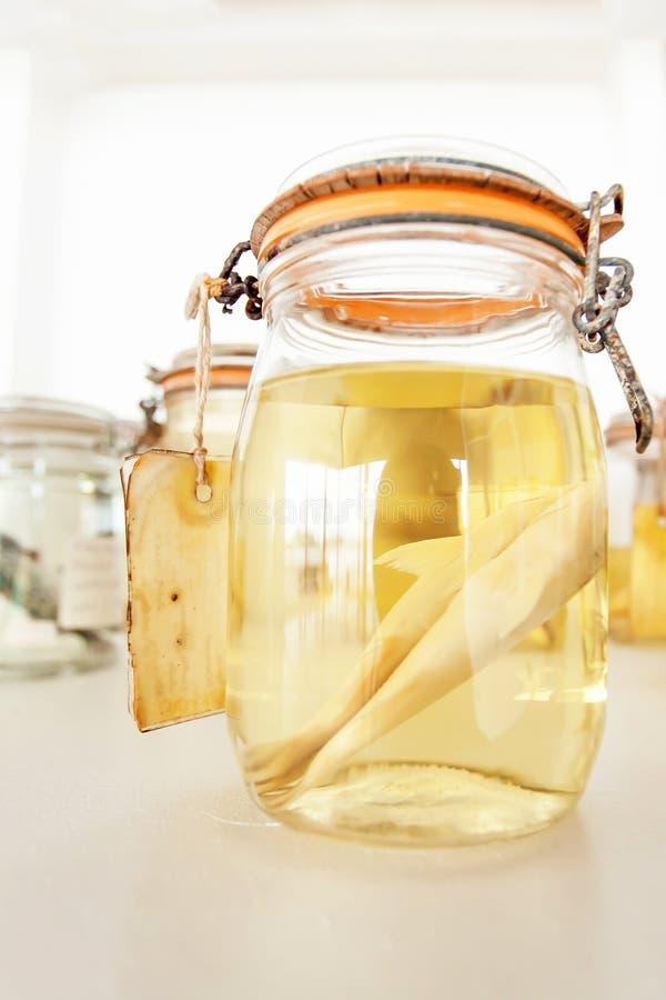 Especímenes de los pescados de mar preservados en los tarros de cristal foto de archivo