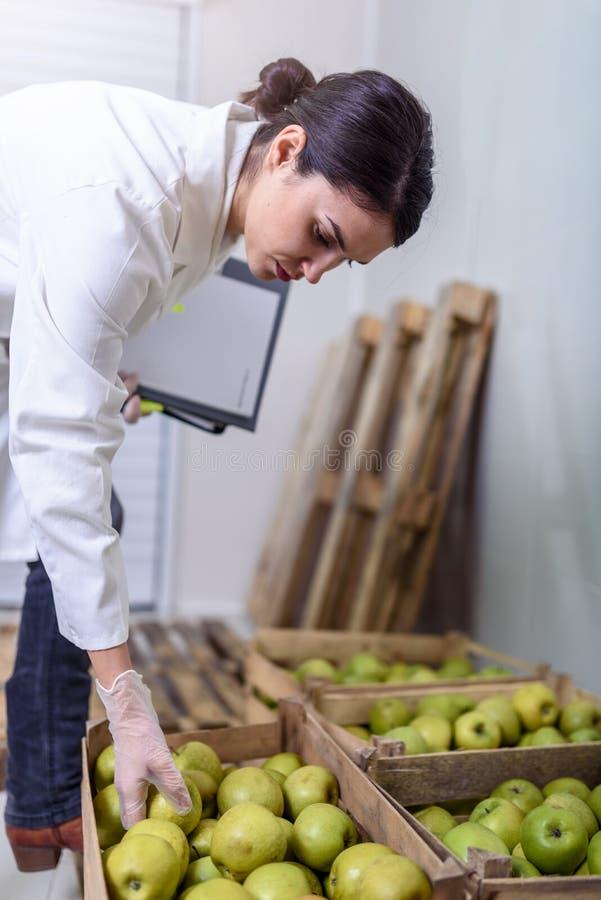 Especialista de la mujer en valor nutritivo y control de salud que comprueba manzanas foto de archivo